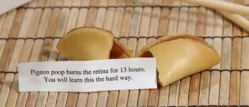Curiously Funny Fortune Cookie Fortunes