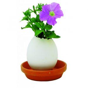 Eggling Crack & Grow Planter Kit - 60th Birthday Present Ideas