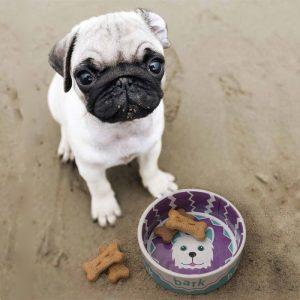 Bark Ceramic Dog Bowl - 13cm - Gifts For Dog Lovers