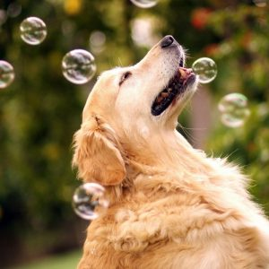 Peanut Butter Flavoured Dog Bubbles - Gifts For Dog Lovers