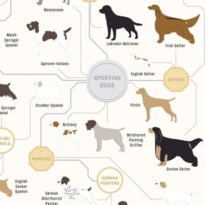 The Diagram Of Dogs Wall Poster 46x16cm | Pop Chart Lab - Gifts For Dog Lovers