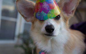 THE BEST BIRTHDAY IDEAS