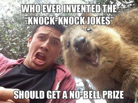The Funniest Knock Knock Jokes For Kids Laughter Guaranteed