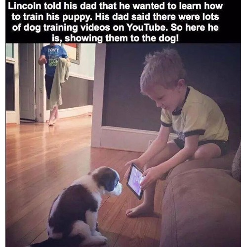 3056a28ea His Dad said there was lots of Dog training videos on YouTube. So here he  is, showing them to the dog! Funny Memes