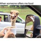 yellow-octopus-food-memes (20)