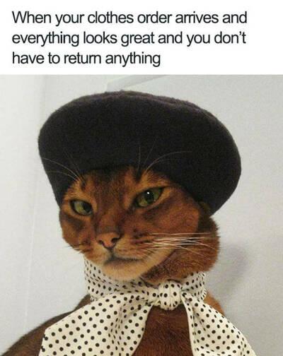 44 Adorable Animal Memes