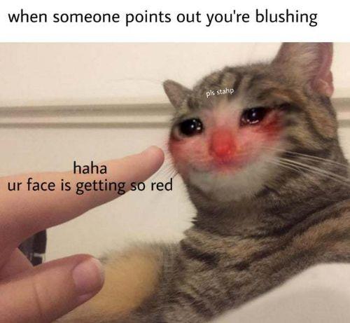 The Purrfect Crying Cat Meme—Schmuserkadser!
